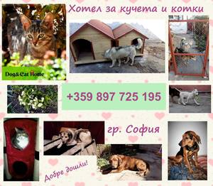 Dog§Cat Home